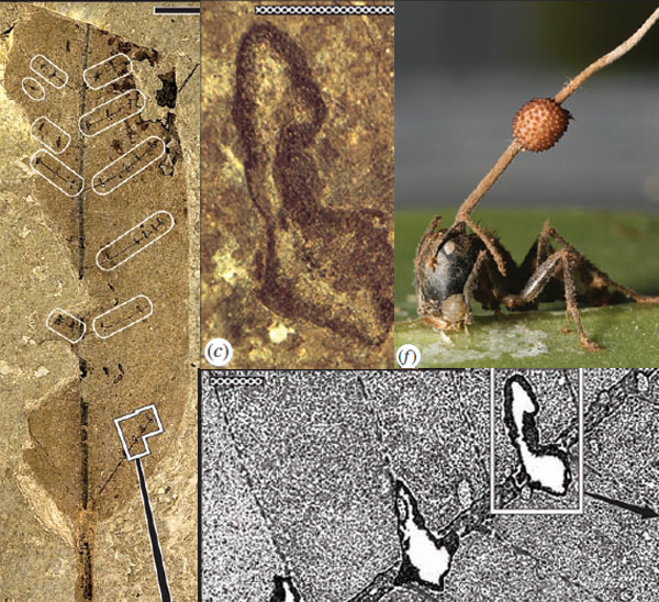 Ant_scars.jpg