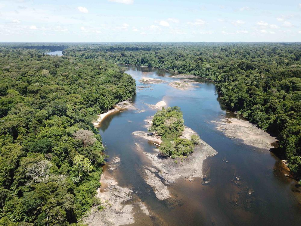 Amazon-River-Electric-Eels
