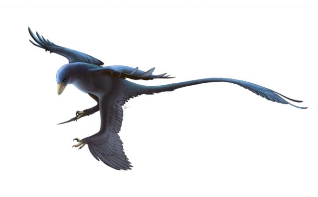 1280px-Microraptor_Restoration-1024x634.png