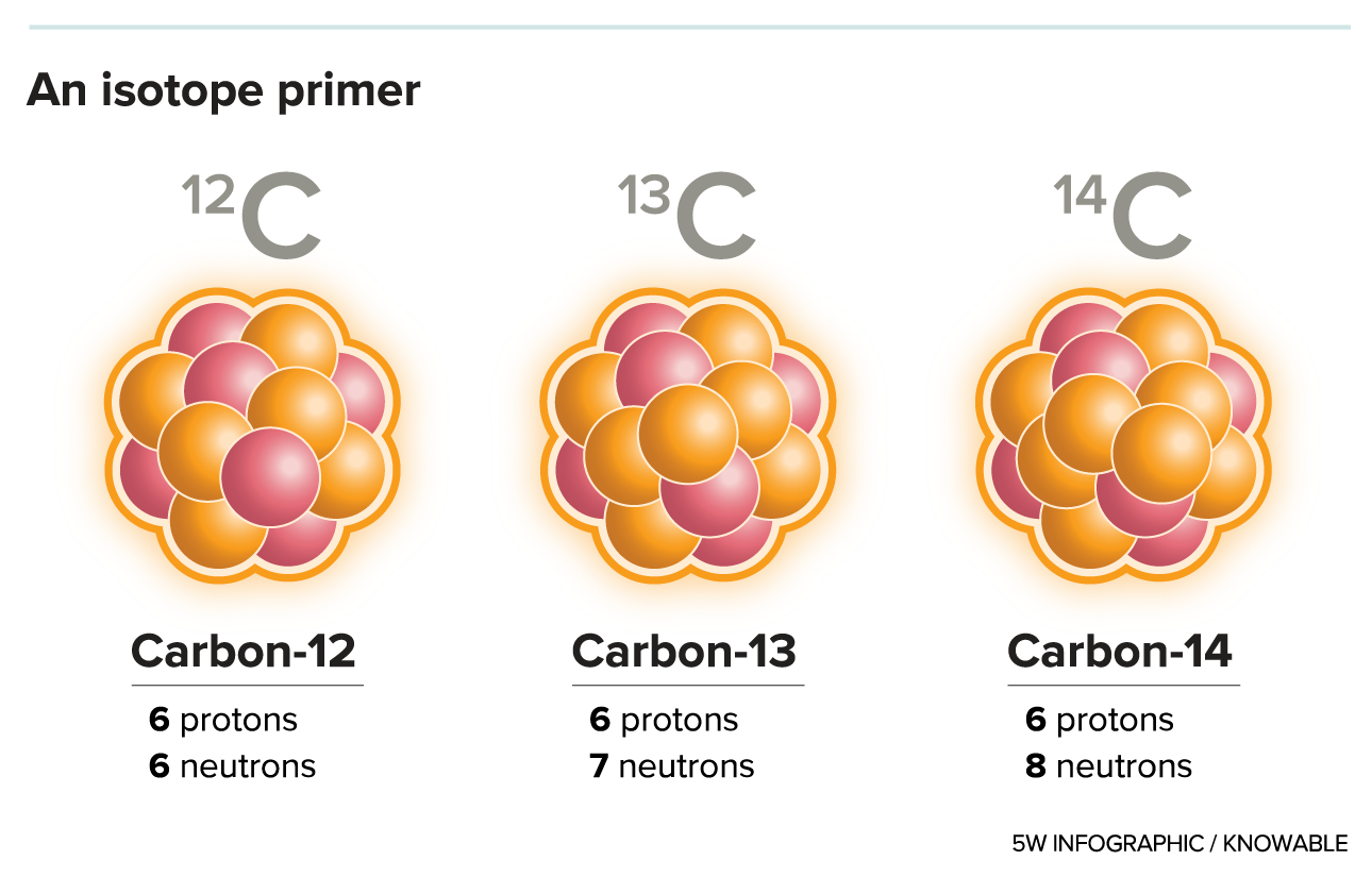 An element, such as carbon or uranium, is defined by the number of protons in its nucleus: Carbon has 6, uranium 92. But atoms may vary in the number of neutrons, producing slightly different flavors, or isotopes, of an element. For example, the most common form of carbon is carbon-12, which has 6 protons and 6 neutrons, and is stable. But other isotopes include carbon-13, which is also stable, and carbon-14, which is unstable and radioactive. Uranium's most common form is uranium-238, which has 92 protons and 146 neutrons, and decays only after billions of years. Other, less stable isotopes include uranium-235 (92 protons and 143 neutrons) and uranium-233 (92 protons and 141 neutrons), both of which can undergo nuclear fission if they are struck by a neutron.
