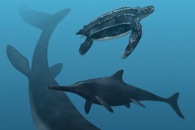 sea-reptiles-847x1024.jpg