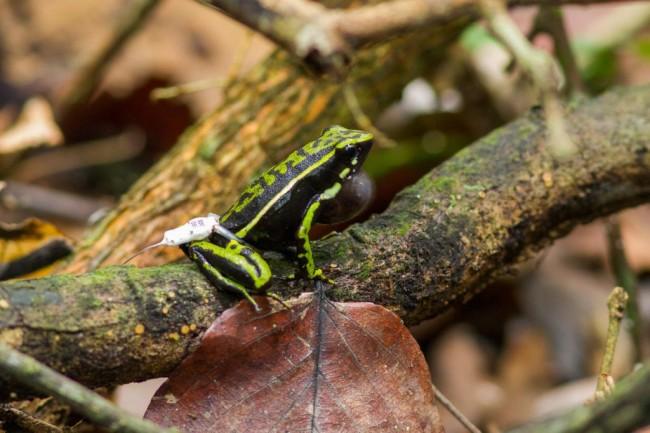 frog-fanny-pack-1024x682.jpg