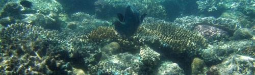 Great_Barrier_Reef.jpg