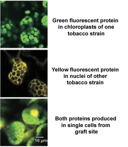 Fluorescent-proteins.jpg