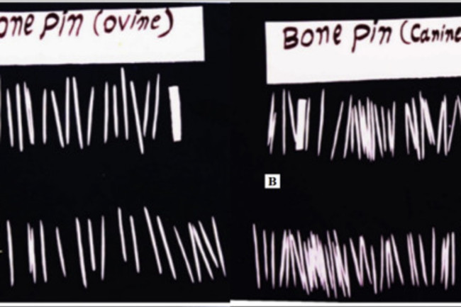 BonePins