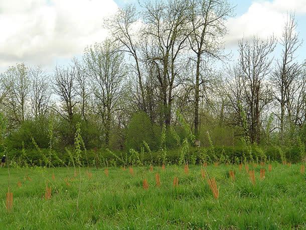 Back-Cottonwoods.jpg