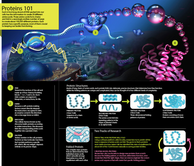 Protein-101