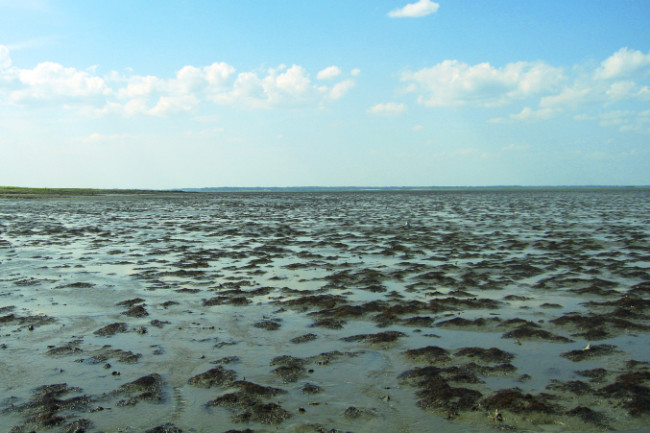 mudflats.jpg