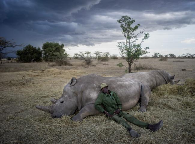 Peter Esegon and last white rhinos - Justin Mott