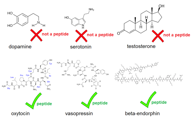 what_is_a_peptide.png