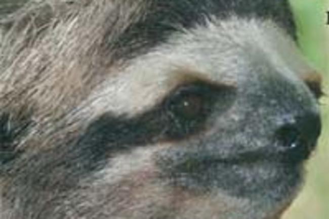 Slothcap.jpg