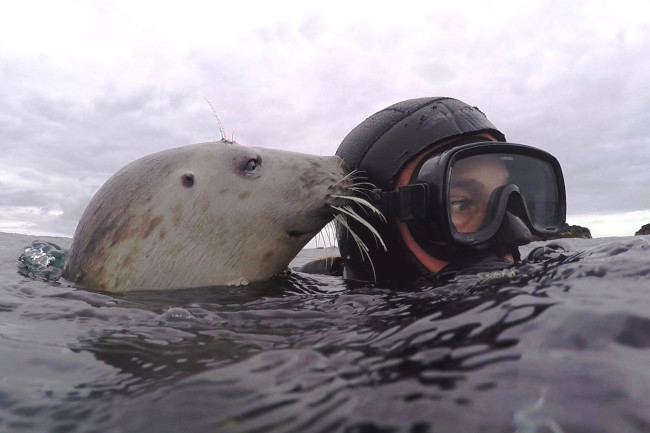 Ben Burville Seal - Courtesy