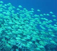 rose-atoll-fish.jpg