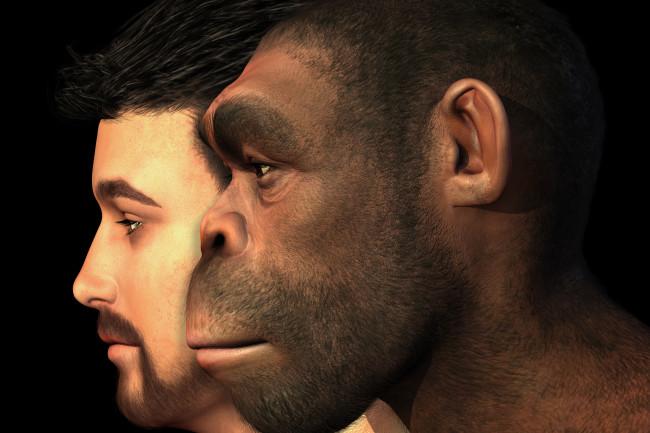 homo net