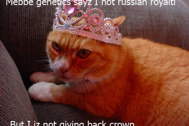 royalty-cat.jpg
