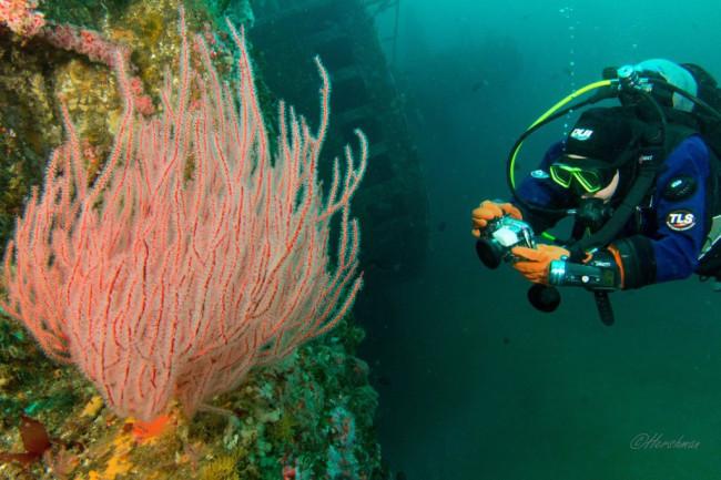 Barbara Lloyd Scuba Diver Sea Fan - David Hershman