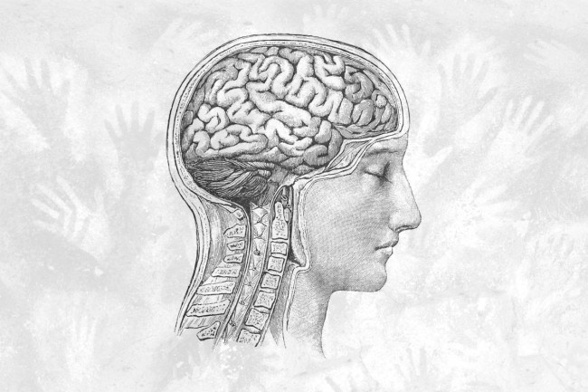 Cave Painting Brain - Discover/Shutterstock