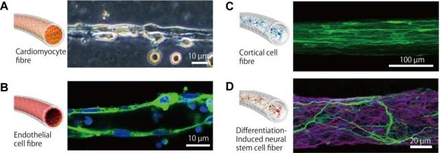 Cell-Types1-1024x352.jpg