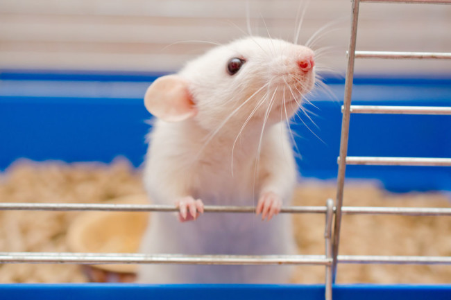 a white mouse in a cage