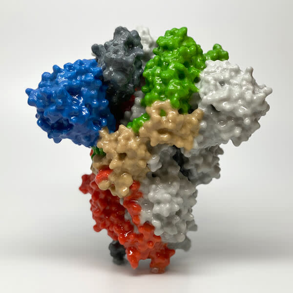 P-covid-19-spike-protein 0