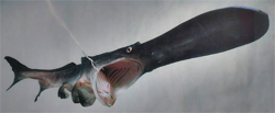paddlefish%20agape.jpg