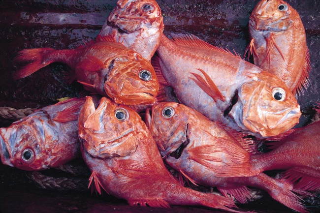 Orange Roughy - New Zealand National Institute of Water and Atmospheric Research