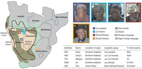 African_genomes.jpg