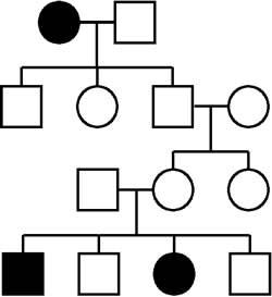 pedigr4.jpg