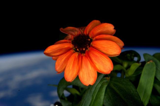 flower-space.jpg