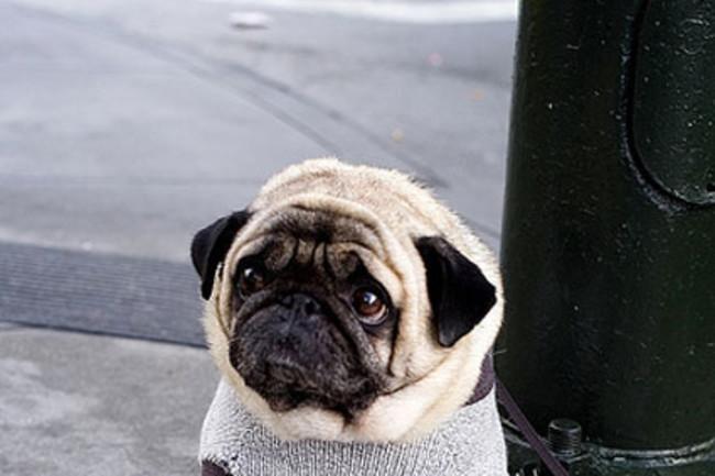 sad-dog1.jpg
