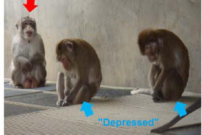 depressed_monkeys.png