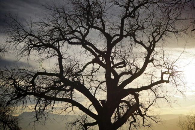 Tree-1024x877.jpg