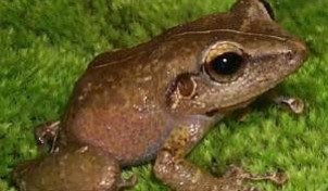 10-frog.jpg