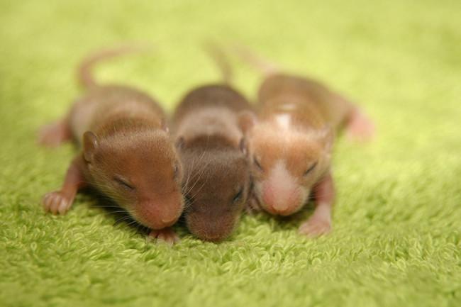 mouse babies huddle