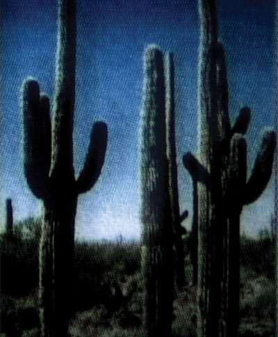 cactussharp2.jpg