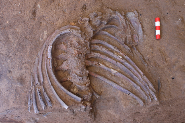 "Return to Shanidar: Surprise Fossil Find At Famous ""Flower Burial"" Site"