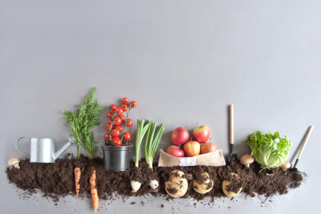 Compost Vegetable Garden - Shutterstock