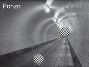 Ponzo.jpg