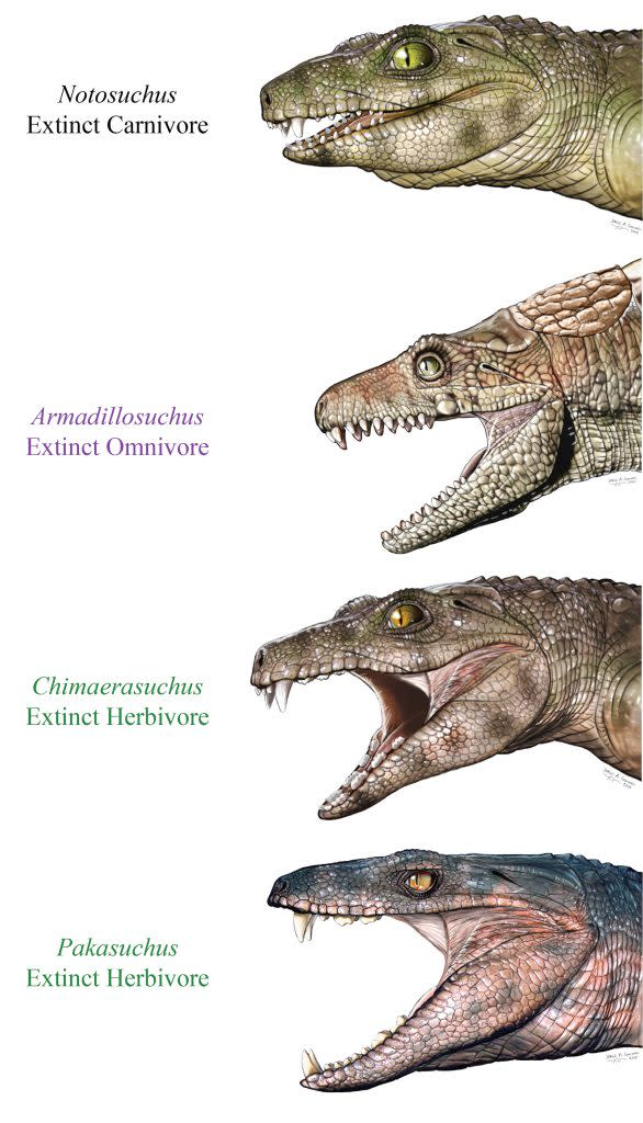 Ancient crocodyliforms - Jorge Gonzalez