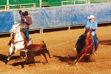 uc-davis-horse.jpg