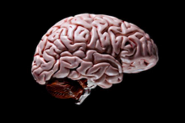 BrainBlack.jpg