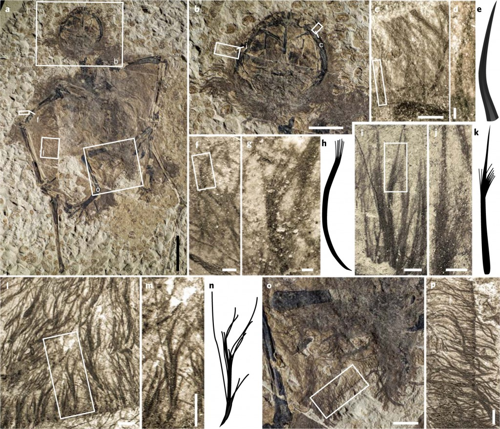 Fossilized filamentous structures. Credit: Baoyu Jiang, Michael Benton et al./Nature Ecology & Evolution