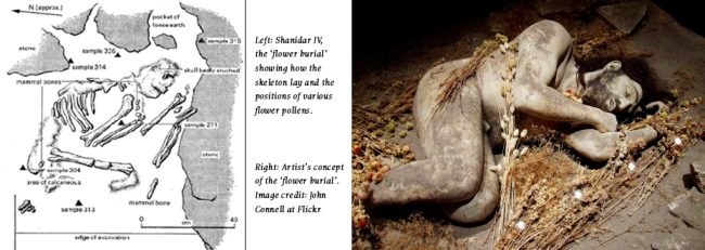 neaderthal-drug-high-flower-burial