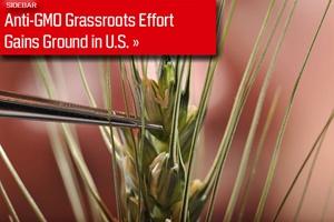 Anti-GMO Grass-Roots Effort Gains Ground in U.S.