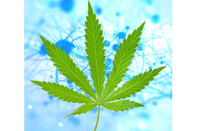 The Experiments Revealing How Marijuana Could Treat Dementia