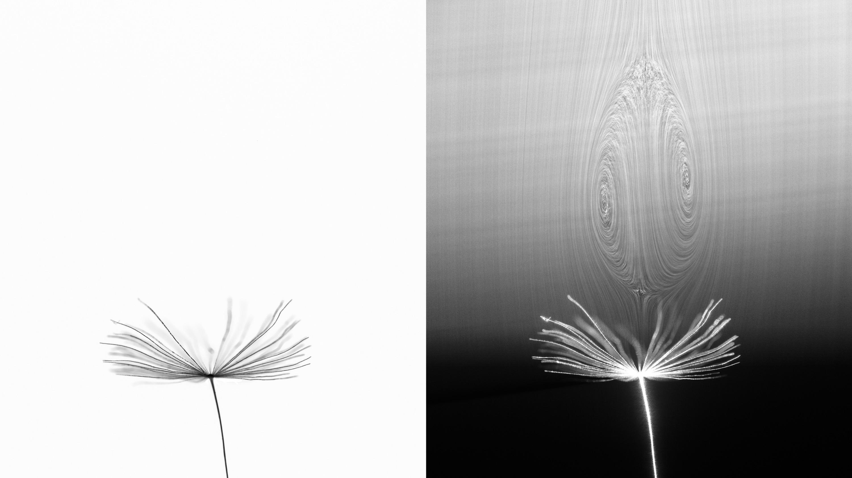 DSC-FL0719 07 dandelion seed vortex