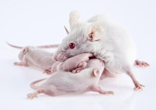 mouse_mom.jpg