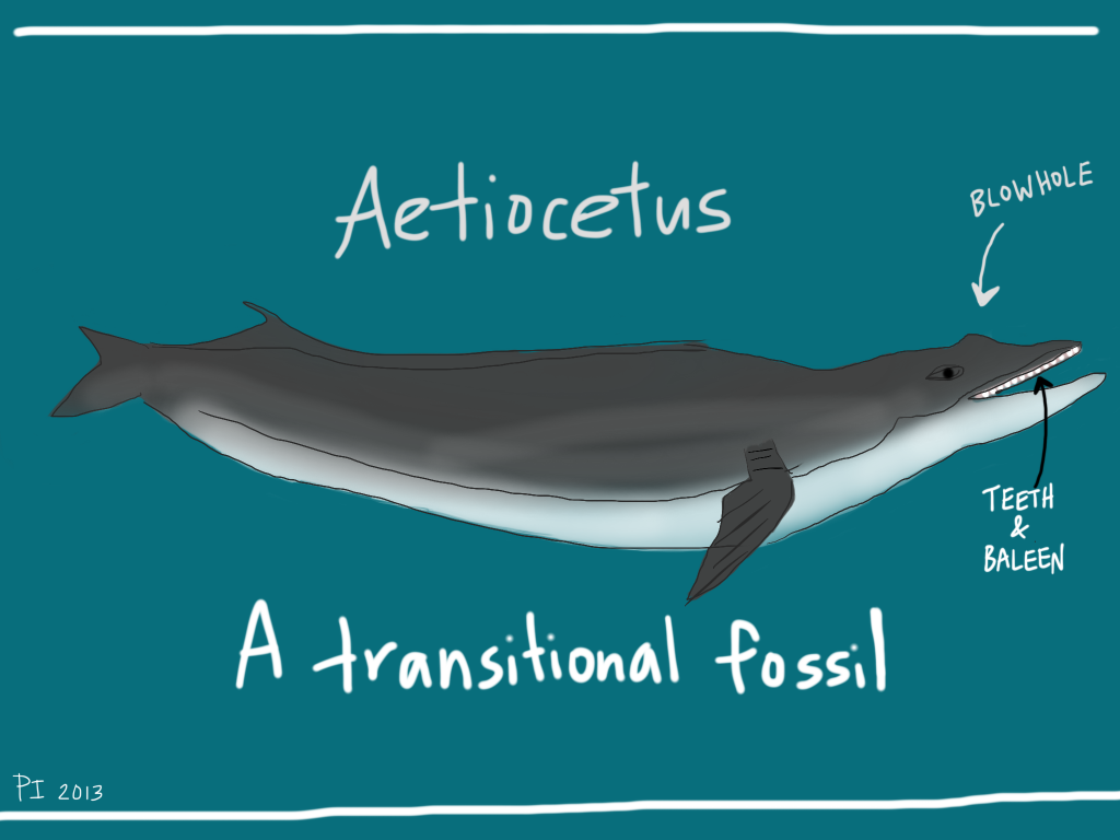 Ancient_Whale-1024x768.png