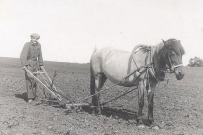 plowing-1024x703.jpg