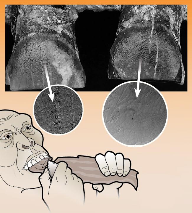 teeth striations determine handedness